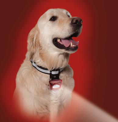 Dog Safety LED Lighted Collar - PupLight2 - Red